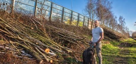 Bomen hadden nooit langs A16 mogen staan: vrees voor lekkage zware metalen
