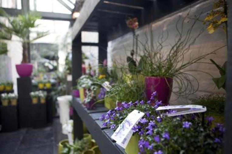 Bloom! Beeld Greetje Van Buggenhout