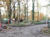 DierenPark Amersfoort startte bomenkap 'op eigen houtje'