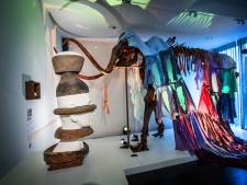 Kunstenaars geven historische voorwerpen uit Maas en Waal een nieuw uiterlijk: Schuilen in een strijkijzer