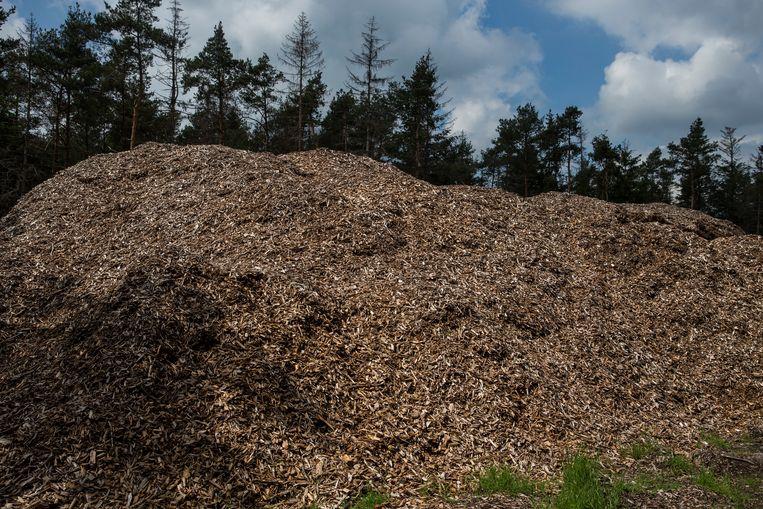 Resten van gekapt hout liggen opgeslagen in het natuurgebied De Sallandseheuvelrug. Beeld Hollandse Hoogte