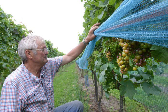 Eigenaar Marius van Stokkom in zijn wijngaard De Linie in Made in 2017.