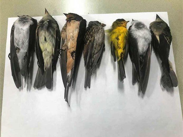 In New Mexico en ook in omringende Amerikaanse staten worden grote hoeveelheden dode vogels aangetroffen.