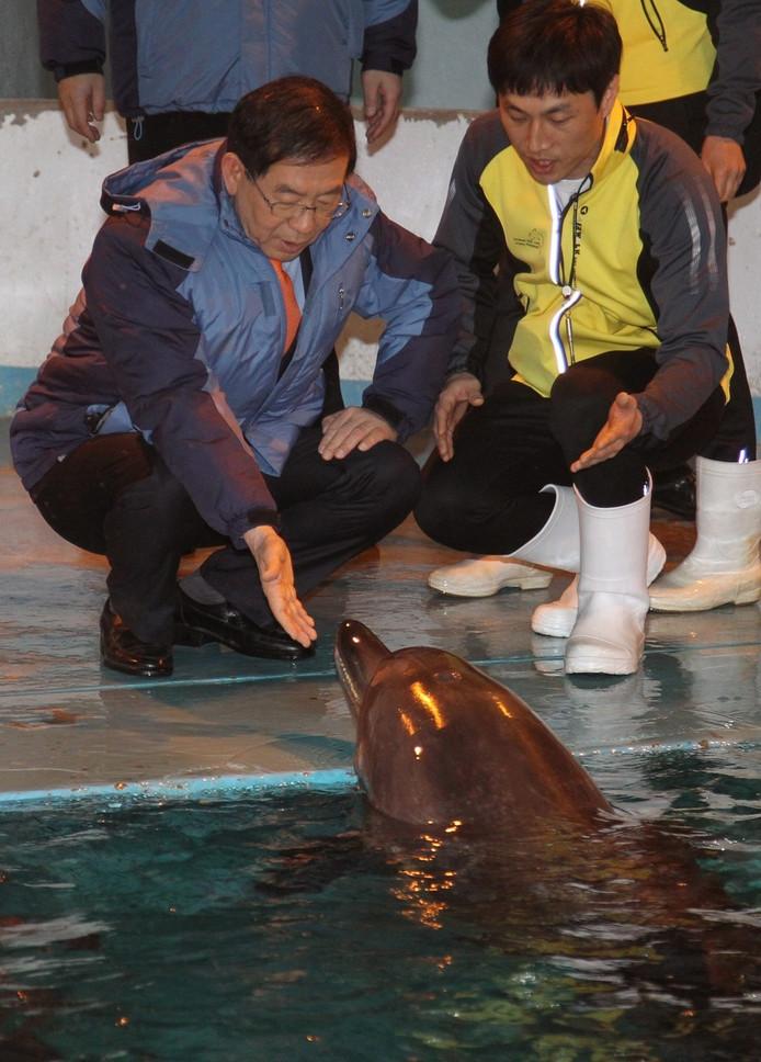 De burgemeester van Seoul, Park Won-soon, bij een van de dolfijnen in de Grand Park zoo.