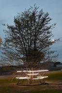 De Vrijheidsboom in Maldegem.