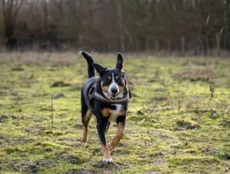 Gemeente zoekt locatie voor hondenweide