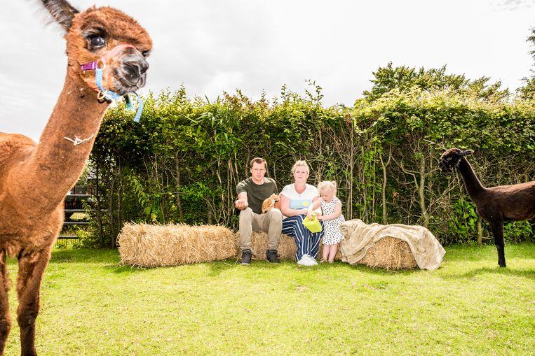 Alpaca's van Lisa, Peter en Fenna Dirkson. Beeld Jan Mulders