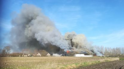 Zware stalbrand in Buntelaere
