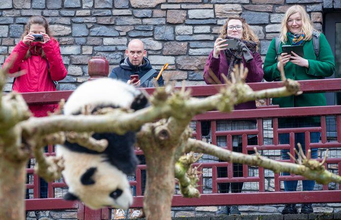 Bezoekers kijken naar het pandajong