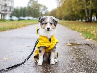 Regenachtig weekend met zachte temperaturen. Pas vanaf donderdag weer even droog en zonnig