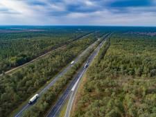 Kaalslag dreigt alsnog langs A28 op Veluwe: bomen worden ergens anders herplant