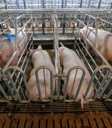 Kabinet trekt miljoenen uit voor inkrimping veestapel