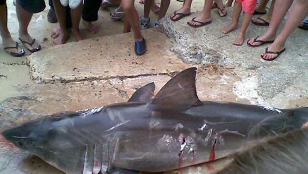 Ooggetuigen hielpen het Australische ministerie van Landbouw en Visserij de daders op te sporen die deze Witte Haai doodden.