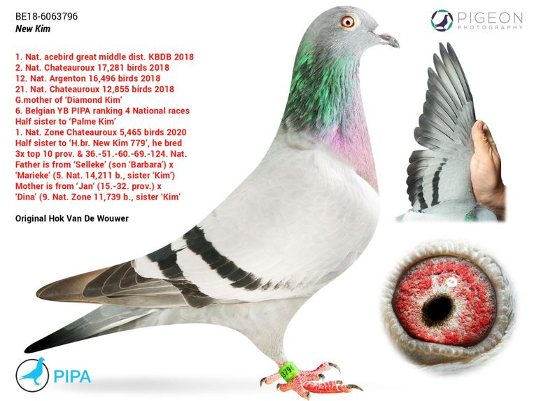 New Kim wordt zonder twijfel de duurste duif ooit. Beeld PIPA