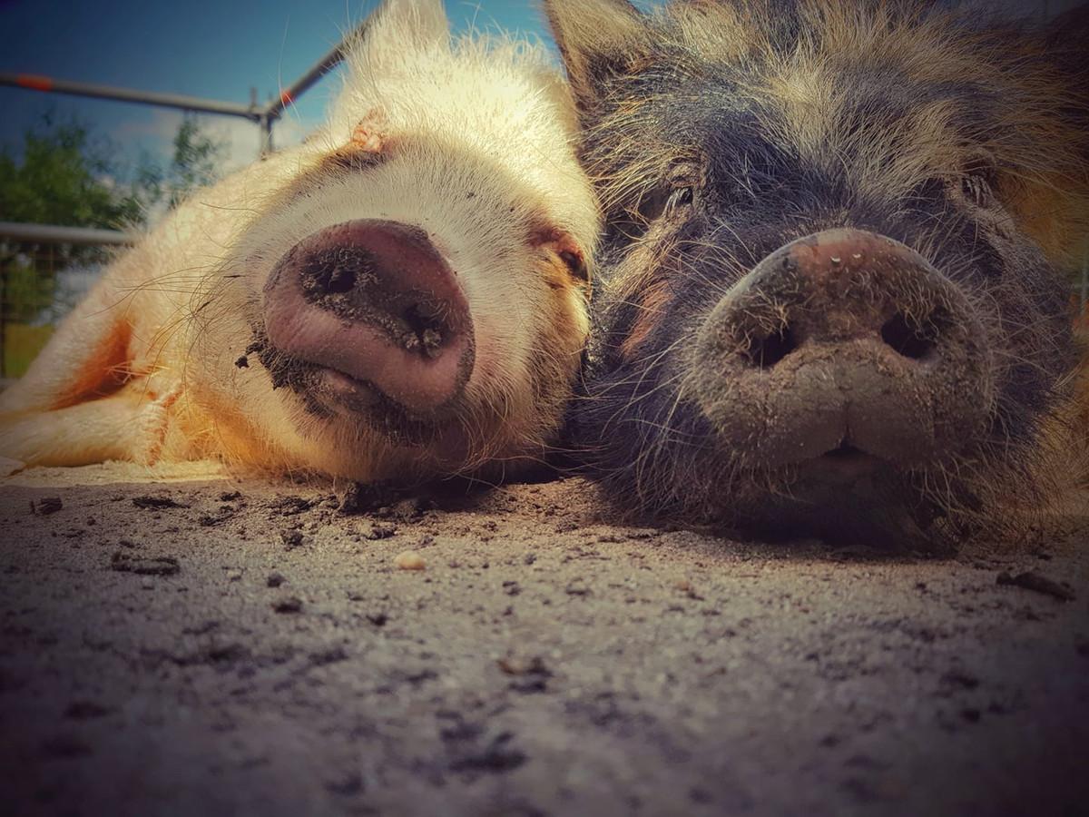 Maf en Barry liggen naast elkaar te slapen