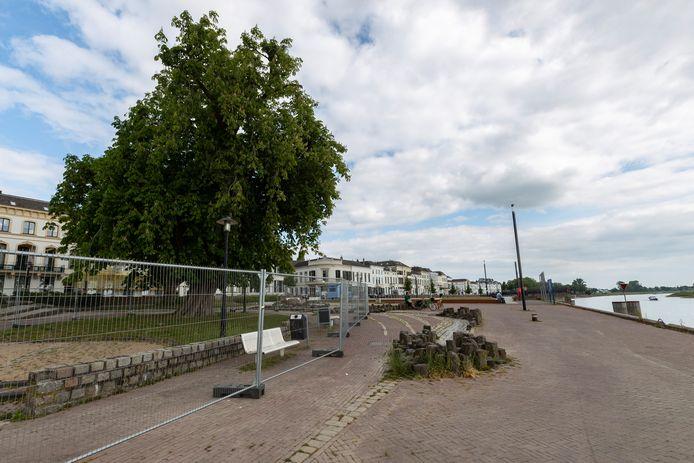 Bij het waterwerk langs de IJsselkade in Zutphen staat een joekel van een paardenkastanje. Na meer dan honderd jaar gaat de zaag erin. Grote hekken staan op rond de boom totdat hij dinsdag wordt gekapt.