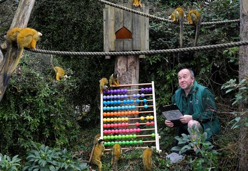 Foto van Dierentelling in de zoo: kijk eens naar het vogeltje