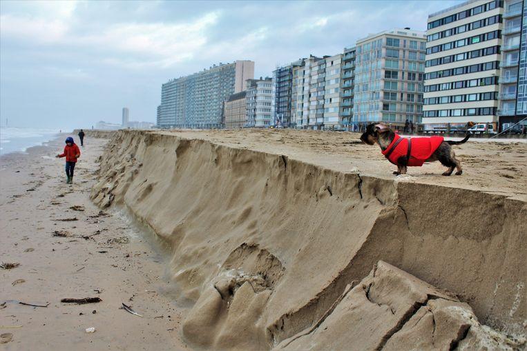 Ook in Oostende ontstonden door het hevige stormweer kliffen op het strand.