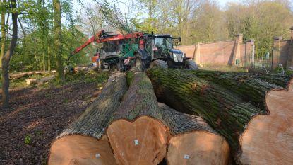 Lading boomstronken op verkeerswisselaar
