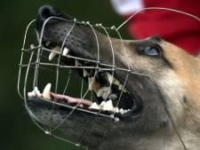De agressieve herder hapte direct in Anny's borst: 'Wat als zo'n hond een kind doodbijt?'