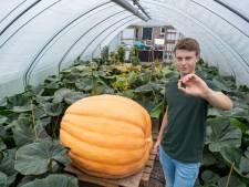 Gerjan (21) haalt grootste pompoenen van Nederland naar Oldebroek