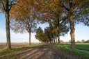 De zandweg Waalwijksebaan in Udenhout.