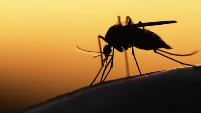 Zó houd je op een natuurlijke manier muggen uit de buurt