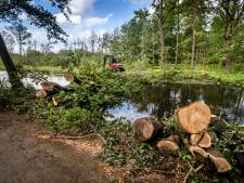 Bomen sneuvelen voor in stand houden hoogveen: 'Anders is dit over een tijd allemaal bos'