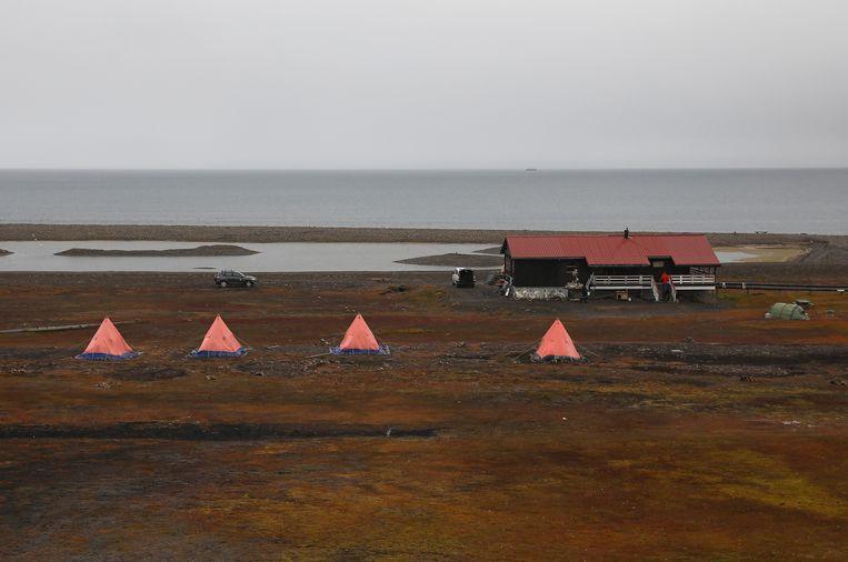 Sinds 1971 zijn vijf mensen rond de plaats Longyearbyen omgekomen door ijsberen. Beeld Getty Images