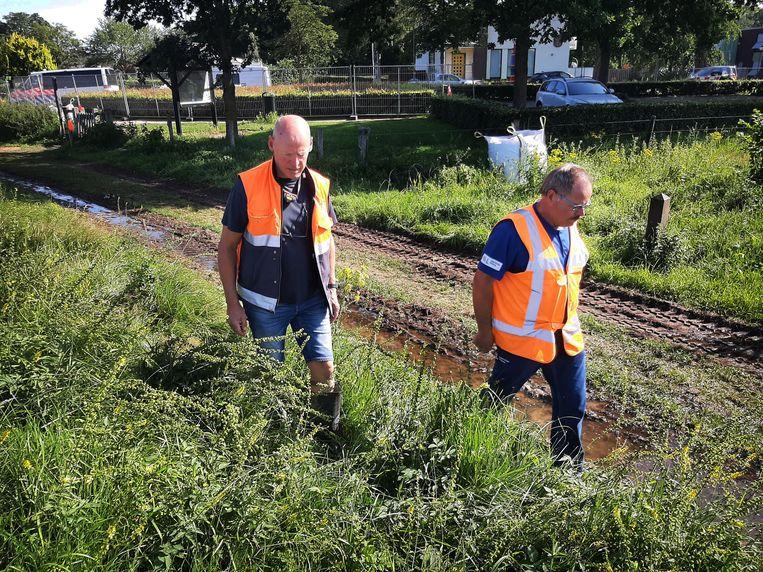 Wolter van Damme, opzichter waterkeringen Zeeuws-Vlaanderen van Waterschap Scheldestromen, inspecteert een dijk in Arcen. Samen met collega Norbert van Rens, inspecteur Waterschap Limburg (rechts).  Beeld Ellen van Gaalen
