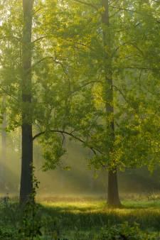 Nuenen onderzoekt wat een weg door de bossen kost, maar dat betekent niet dat die er ook komt