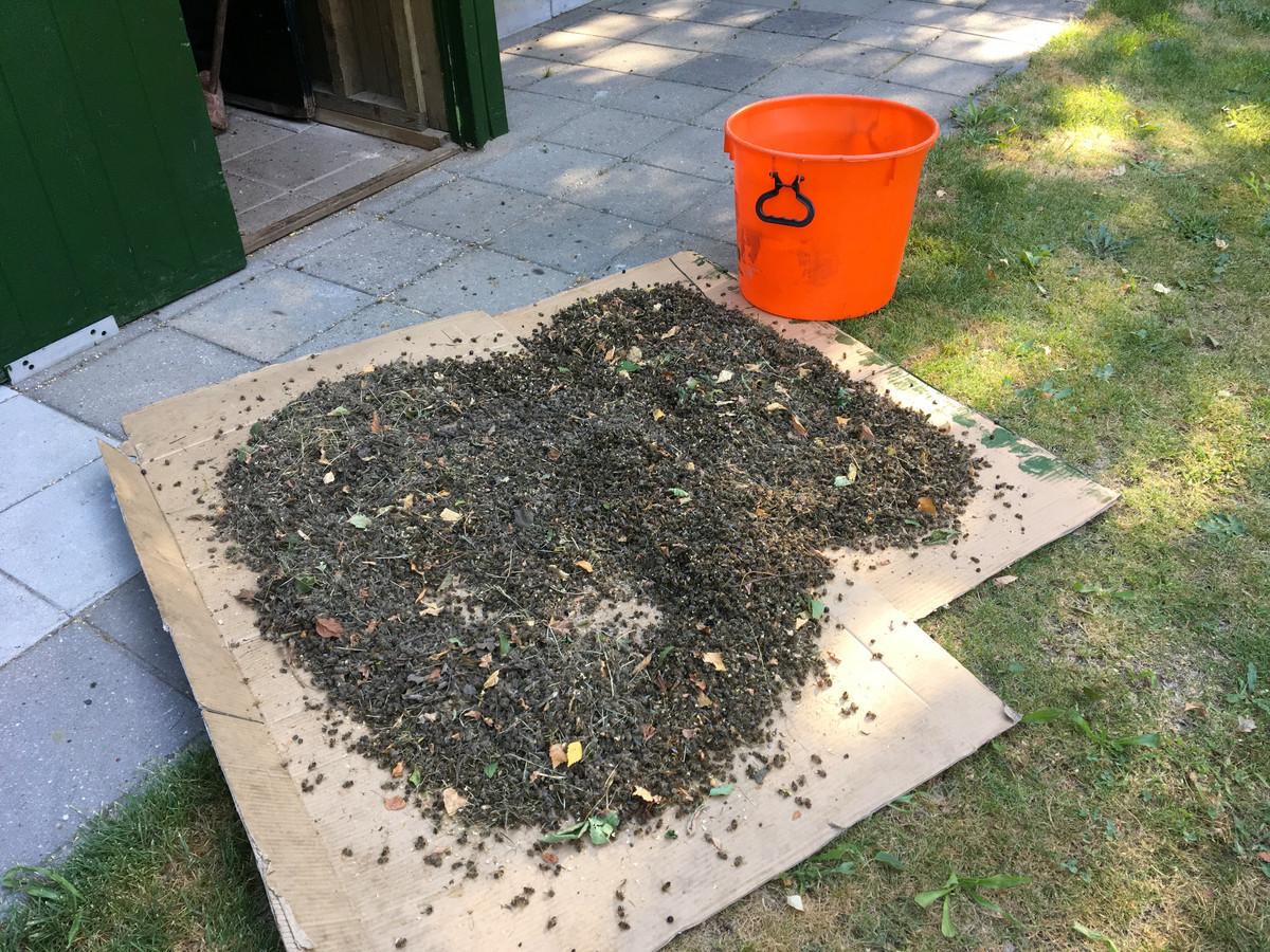 Een imker op Landpark Assisië trof begin juli van dit jaar duizenden dode bijen bij zijn bijenstal.