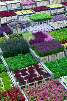 Bloemenveiling Royal FloraHolland draait recordomzet: 153 miljoen euro in één week