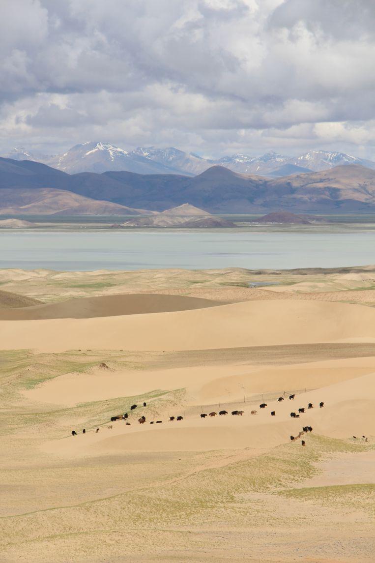 De hele reis lang zal een aaneenschakeling blijken van onmetelijke (berg)landschappen waar de jak keizer is. Beeld RV