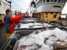 Stellendamse vissers houden hun adem in