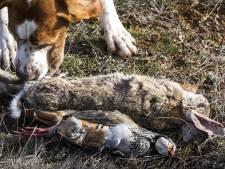 'Gemeenteraad gaat niet over jacht op grond Deurne'