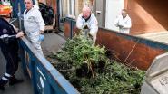 Plantage van 2.000 wietplanten ontmanteld