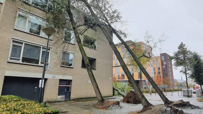 Vier op een rij: hoge bomen omgewaaid tegen flat aan de Middellaan in Breda