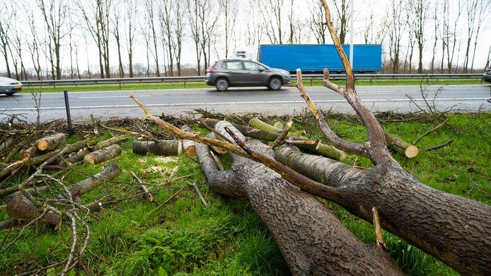 Een omgevallen boom zorgde voor een ongeluk op de A50.
