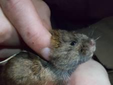 Probleem voor marter en vogels: geen muis te bekennen op de Veluwezoom