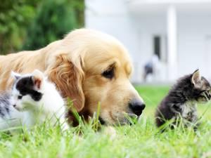 Chats en coma éthylique, chiens brûlés à la javel: des vétérinaires alertent contre la désinfection des animaux