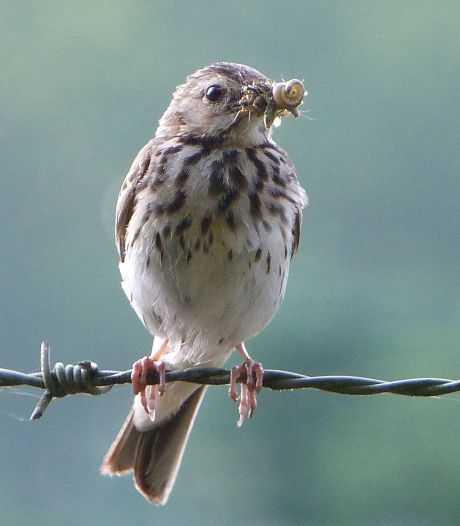 Uitvliegende vogels en onverwachte gasten: najaarstrek in Europa is in volle gang