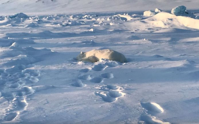 De ijsbeer werd neergeschoten en later dood aangetroffen bij het vliegveld.