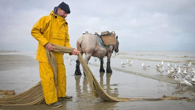 """""""Hij werd onwel en overleed, terwijl zijn paard nog doorliep"""": paardenvisser Johan Vanmassenhove sterft op terugweg van zee"""