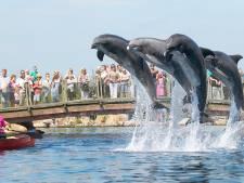 Dolfijnen van Dolfinarium naar China? 'Zo snel mogelijk terug naar zee', vindt Partij voor de Dieren