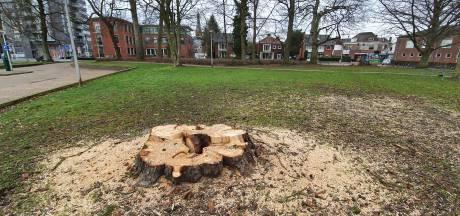 Flinke bomenkap in centrumpark Hengelo, waarom?