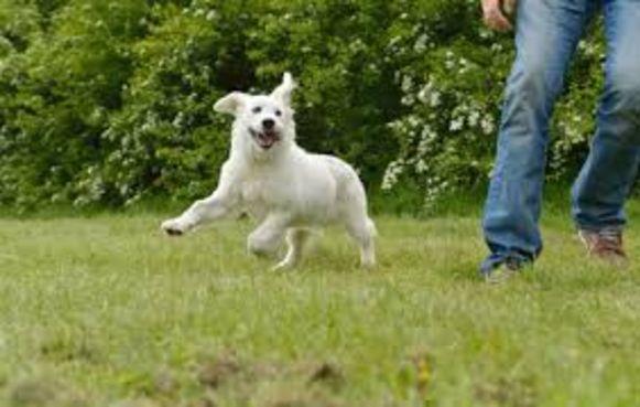 Schelle krijgt een hondenweide aan de Tuinlei.