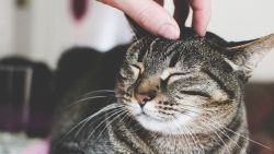 Een aai over hun kop vinden honden en katten niet zo leuk als jij denkt