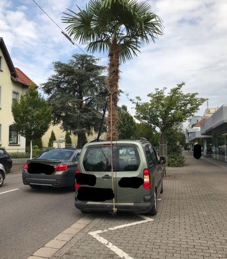 Man aangehouden met metershoge palm uit open dak