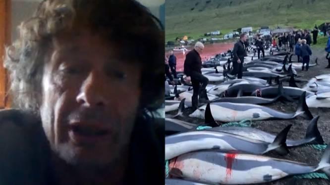 """Verontwaardiging na grootste jacht ooit op dolfijnen, 1.400 dieren afgeslacht op Faeröer-eilanden: """"Echt niet meer van deze tijd"""""""